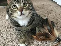 Offered by Owner - Willard - Sweet teen's story Hi, I'm