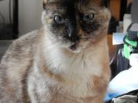 Sweetheart Sassy is a beautiful siamese girl and loves