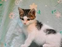 My story Oksana is a 2 month old female domestic medium