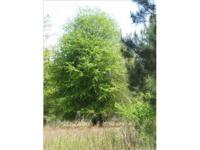 142 Acres of Timber Land and Farm Land for Sale in