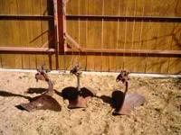 Old used tractor plows. Great for garden and lawn