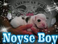 OLDE ENGLISH BULLDOG 3 WEEKS OLD; RESERVE YOURS $ 1100