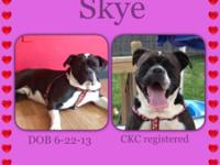 Skye is a nearly 1 yr old olde english bulldog. She is