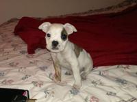 We have one boy available he is 9 weeks prepared and