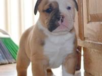 I am accepting deposits now! They are 5wks old. Love to