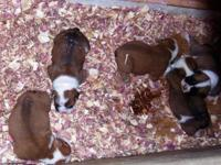 3 males and 2 females, for pet homes only they are not