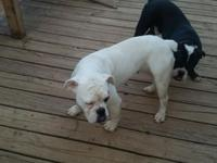 I have 2 beautiful olde English bulldogs.. both are due