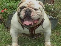 http://www.bulldogpuppy-sale.com >>>>>> -