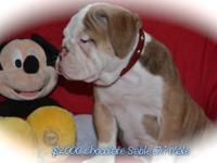 I have 1 beautiful bulldog puppies for sale.1 females