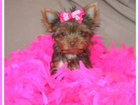 I have a female 5 yr old yorkie and a 4 yr old yorkie