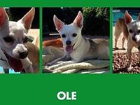 Ole's story Ole is a very sweet little guy, he is a bit