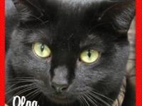 Olga's story Olga is a two year-old, all-black female