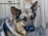 Olga was found at Animal Control.  She is clean in her