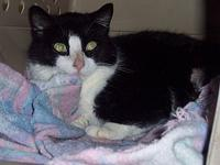 "Olive's story Olive: ""I am a black and white female"