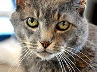 Olive's story Greetings! I'm Olive. I'm a gentle,