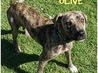 OLIVE's story THE PERFECT FAMILY PET! This sweet girl