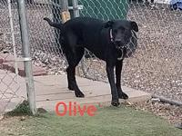 Olive's story Olive is a very sweet girl that was