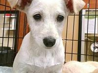 Oliver's story Sweet Beagle/Terrier Mix Available for