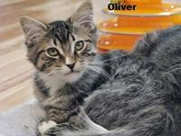 Oliver's story ~~Oliver, Charlie, Rascal and Max came