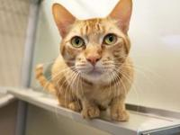 Oliver's story Meet Oliver, a friendly, outgoing and
