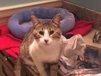 Oliver's story Meet Oliver! He is very affectionate,