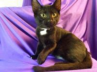 OLIVER's story Oliver is a dreamboat! He`s sleek and