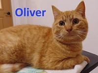 Oliver's story Meet Oliver. He is a very sweet friendly