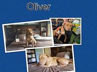 Oliver's story Young Oliver was found tossed in the