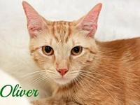 Oliver Male's story Meet Oscar, he is a purr box and