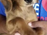 Olivia is a spayed, 4 month old pup that was rescued in