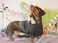 Olivia's story Olivia, recently released from a