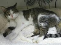 Olivia is a three year old, female DSH. She's lucky to