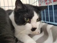 Olivia is a very sweet, smaller adult cat. She loves to