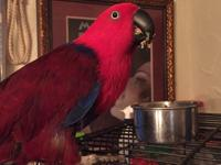 Olivia is a 17 year old female Eclectus. She is typical