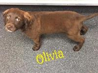Olivia's story Please understand we must conduct home