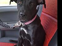 Olivia's story Adopt me.....my name is Olivia. I'm a