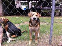 Hi, Debi w/Prue Humane Society: ***Come Join Us On