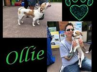 Ollie's story You can fill out an adoption application
