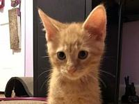 Ollie's story Description: orange tabby Personality: