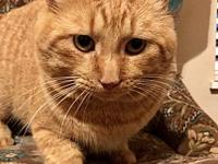 Ollie *FOSTER NEEDED*'s story Meet Ollie, a 2 year old,