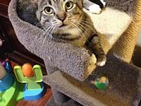 My story Ollie Jr. is an awesome cat! He loves to talk,