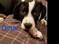 Omar's story Rebel Rescue dogs must have supervised