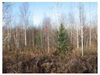 Attention All Hunters !! Check out this 80 acre parcel