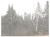 Where the Big Bucks Hide!! This 45.50 acre parcel of