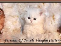Persians Of Jewels Vaughn Cattery is quite delighted to
