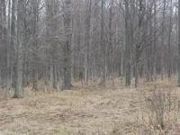 Price Reduced On This Large, Vacant Hunting