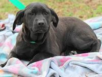 Ondrea B awesome puppy's story Please contact Vickie