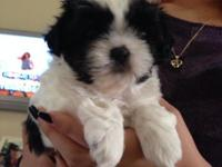 I have one female black/white born 02/11 available for