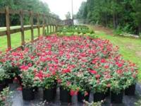 Scarlet Oaks Nursery opens this Saturday at 9:00am.