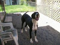 I have one great dane left, he is a black, 12 weeks old